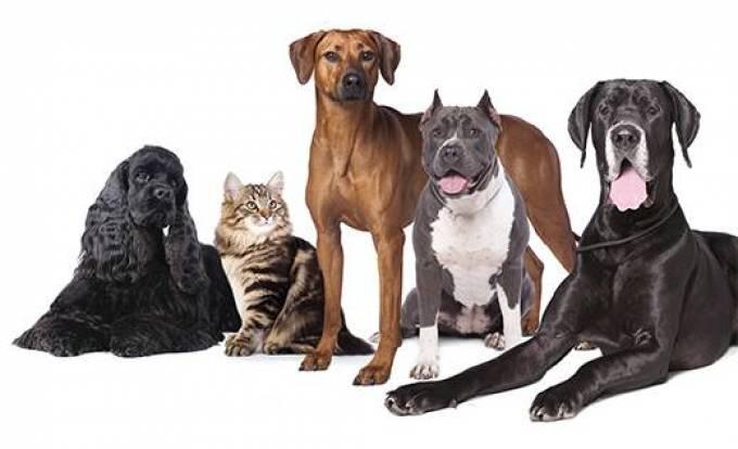 Choosing the Right Labrador Retriever Breeder