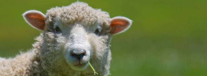 Why Using Wool Products for Your Bedding Solution Makes Perfect Sense